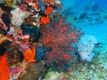 Mjuk korall Royaltyfri Bild