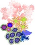 Mjuk korall Royaltyfri Fotografi