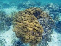 Mjuk korall under aktuellt havsvatten Undervattens- foto för korallrev Tropisk havskust som snorklar eller dyker royaltyfria foton