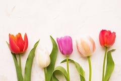 Mjuk minimalistic vårblommasammansättning på texturyttersida Härlig kvinnlig växtgarnering för feriehälsningkort Royaltyfri Fotografi
