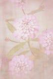 Mjuk retro bakgrund för härlig defocus med mjuka blommor Royaltyfri Bild