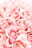 Mjuk rosa bakgrund av blommande rosor Royaltyfri Foto