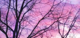 Mjuk rosa purpurfärgad solnedgång Fotografering för Bildbyråer