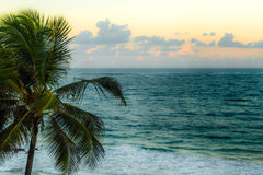 Mjuk solnedgång bak ett San Juan, Puerto Rico strand med en palmträd fotografering för bildbyråer