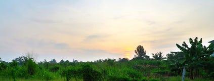 Mjuk solnedgångsikt från hemstadträdgård Arkivbilder