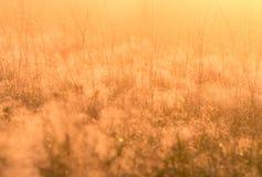 Mjuk suddig äng solljuset med en varm färg Fotografering för Bildbyråer