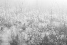 Mjuk suddig bakgrund av en äng i morgonsolen Royaltyfria Foton