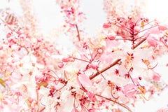 Mjuk suddighet av rosa blommor Arkivbild