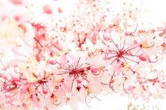Mjuk suddighet av rosa blommor Royaltyfri Fotografi