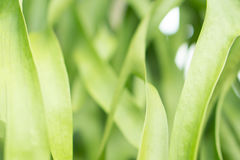 Mjuk vår för abstarct för blomma för grönt gräs för fokus naturbackgroun Royaltyfri Fotografi