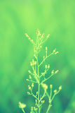 Mjuk vår för abstarct för blomma för grönt gräs för fokus naturbackgroun Royaltyfri Bild