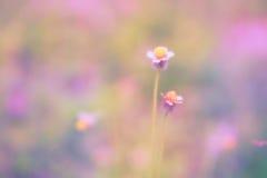 Mjuk vår för abstarct för fokusgräsblomma naturbakgrund Royaltyfri Foto