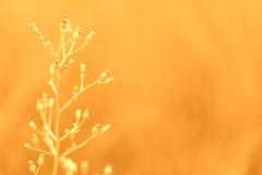 Mjuk vår för abstarct för fokusgräsblomma sommar, höstnatur Royaltyfria Foton