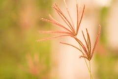 Mjuk vår för abstarct för fokusgräsblomma sommar, höstnatur Royaltyfri Fotografi