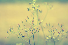 Mjuk vår för abstarct för fokusgräsblomma naturbakgrund Arkivfoton