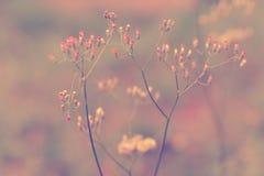Mjuk vår för abstarct för fokusgräsblomma naturbakgrund Royaltyfri Fotografi