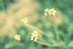 Mjuk vår för abstarct för fokusgräsblomma naturbakgrund Royaltyfria Bilder