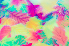 Mjuka abstrakta Autumn Leaves Motion Blur Image Royaltyfri Bild