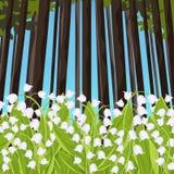 Mjuka blommor för liljekonvaljvår i en skogglänta, vektorillustration Vita knoppblåklockor och gröna stjälksidor royaltyfri illustrationer