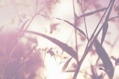 Mjuka blommor och gräs i aftonsolilsken blick, suddigt defocused som tonar fotografering för bildbyråer