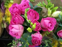 Mjuka delikata vibrerande blommor Arkivbild