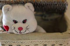 Mjuka leksaker - vit björn royaltyfri foto