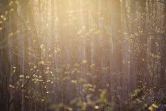 Mjuka rosa färger och gult ljus på en spirande skog royaltyfria foton