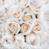 Mjuka Rose Buds som en bakgrund royaltyfri fotografi