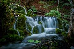 Mjukt vatten som faller i skog Royaltyfri Fotografi