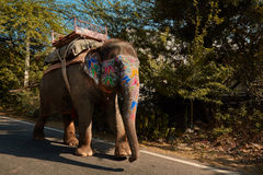 Målad elefant som går på vägen Arkivfoton