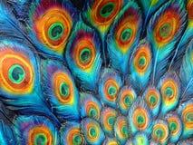 målad påfågel Fotografering för Bildbyråer