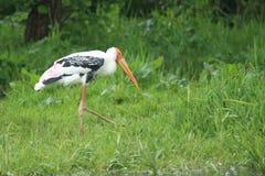 Målad stork Royaltyfri Fotografi