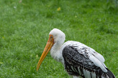 målad stork Royaltyfri Bild