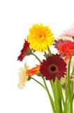 Mélange des fleurs de gerber Image libre de droits