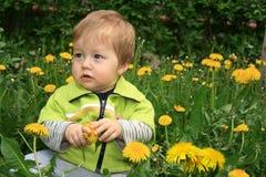 mlecz dziecka Fotografia Stock