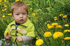 mlecz dziecka Fotografia Royalty Free