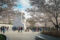 MLK Monument and Cherry Trees. WASHINGTON DC - MARCH 29, 2017 - Blooming cherry trees and tourists surround the Martin Luther King, Jr. Monument at the Tidal stock photos