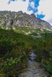 Mlynicka dolina, Vysoke Tatry (Mlinicka谷,高Tatras) -斯洛伐克 图库摄影