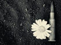 7 62mm子弹和花 库存图片
