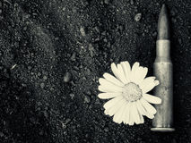 7.62mm Bullet and Flower Stock Images