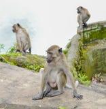 (1) 20mm 7 dołączali kamery e f dżungli obiektywu małp Olympus p1 panasonic obrazek Singapore brać Fotografia Stock