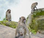 (1) 20mm 7 dołączali kamery e f dżungli obiektywu małp Olympus p1 panasonic obrazek Singapore brać Fotografia Royalty Free