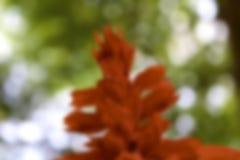 50mm plam tła wpływu pożarów nocy nikkor strony strona Obraz Royalty Free