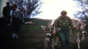 (8mm Vintage) 1952 Woman Showing Two Cows Who Is Boss. Iowa, USA. stock footage