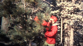(8mm Vintage) 1965 Xmas Tree Chop Your Own Montage stock video
