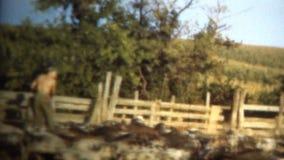 (8mm Wijnoogst) 1950 de Landbouwer Feeding Pigs van Iowa, de V.S. in Pen stock footage