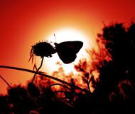 MM29A-1207 ANM BUTTERFLY SUN SIL S10 OP Royalty Free Stock Image
