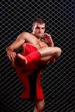 MMA imagens de stock royalty free