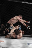 Mma fighters fight at the ring Stock Photos