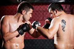 MMA Fighters during a fight Stock Photo